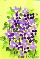 紫花菜(ムラサキハナナ)のイラスト