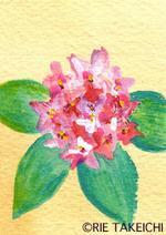 3月16日の誕生花と花言葉花のイラスト一年366日の花言葉と誕生花の