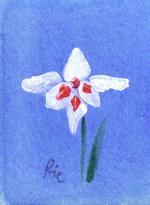 早咲きグラジオラスのイラスト