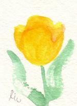チューリップ(黄)