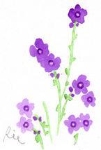 2月24日の誕生花と花言葉花のイラスト一年366日の花言葉と誕生花の