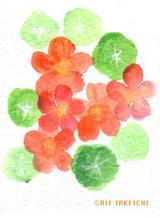 5月11日の誕生花と花言葉ナスタチウムディモルフォセカ一年366日の