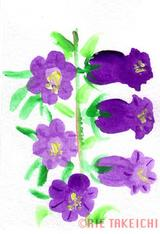 5月15日の誕生花と花言葉カンパニュラ西洋シャクナゲ一年366日の花