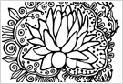 rhizome(蓮の花)